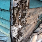 Carpenter ant damage repair in Midcoast Maine